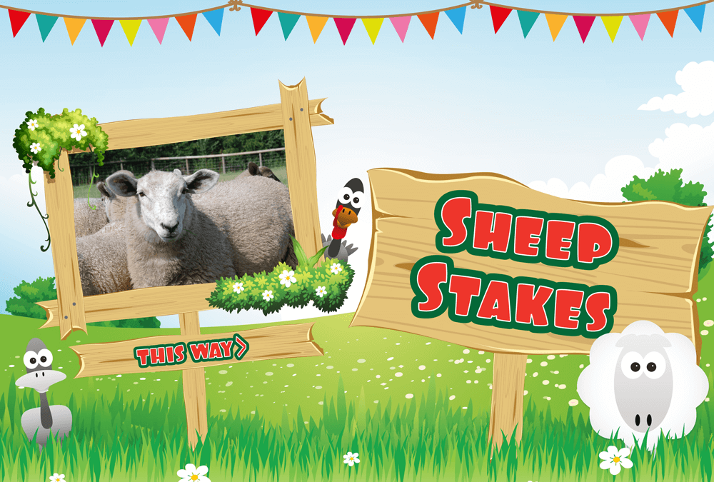 Little Owl Farm Sheepstakes!
