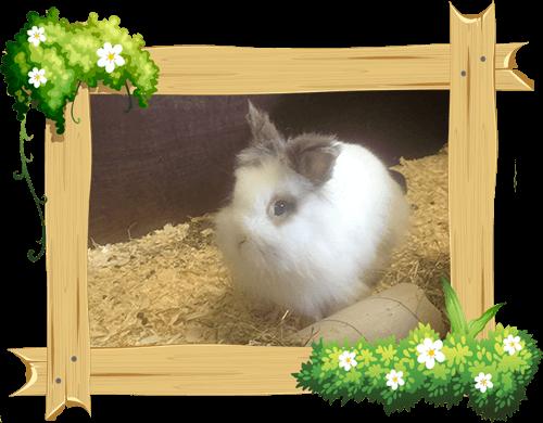 bunny_frame
