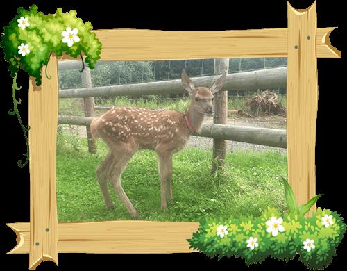 deer_frame