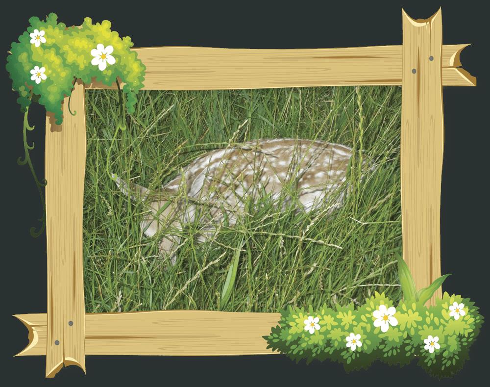 frame_deer1