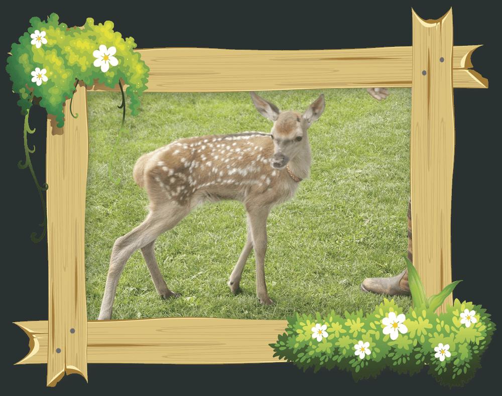 frame_deer2