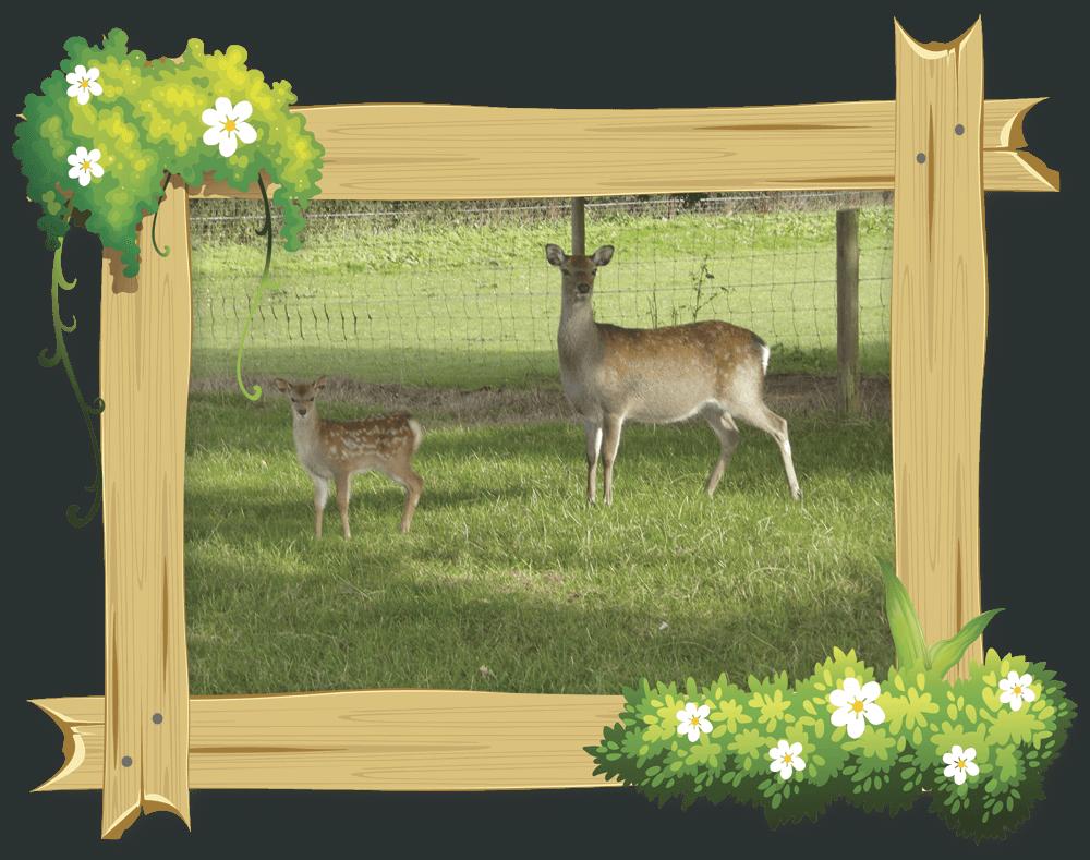 frame_deer3