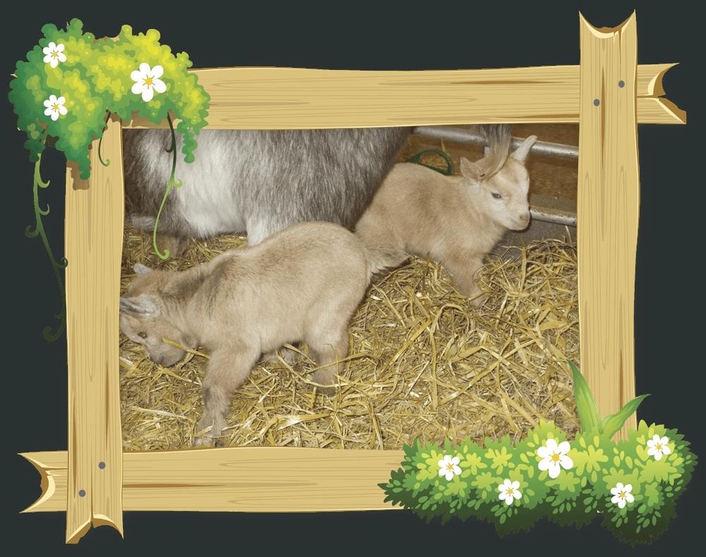 frame_goat1
