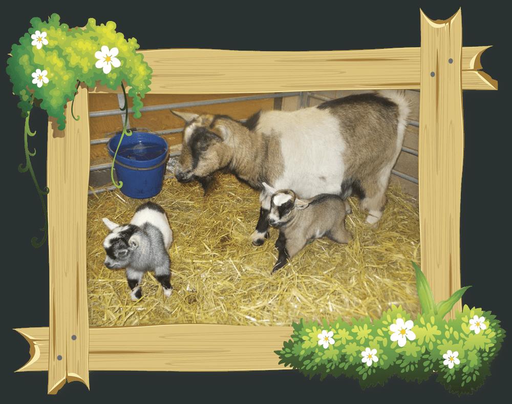 frame_goat2