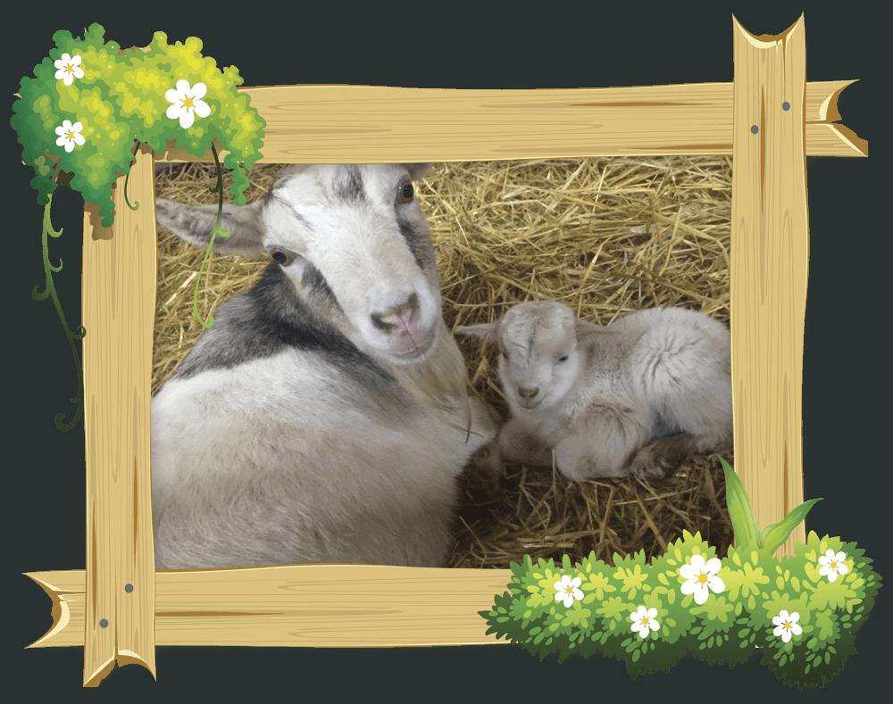 frame_goat5